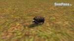 The Sims 3 Pets - Fotos de alguns animais 075-150x84