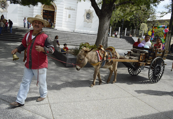 Guanajuato - Alcalde panista regala burros a niños para ir a la escuela en Guanajuato  - Página 4 Paseo_carreta-2