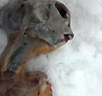 சைபீரியாவில் வேற்றுக் கிரகவாசியின் சடலம் கண்டு பிடிப்பு (காணொளி இணைப்பு) Allien-150x140