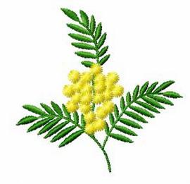 Lekovito Bilje Mimosa-11