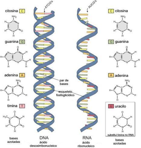 Descobertas, Curiosidades e Mistérios Inexplicáveis/Conspirações - Página 6 DNA10