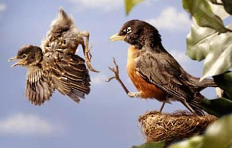 Бан-лист Bird