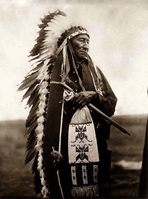 coltivazioni: ulivo Sioux-warrior