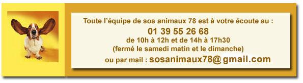 EMIR - x braque 3 ans - Sos Animaux 78 à Rocquencourt (78) Contacttel