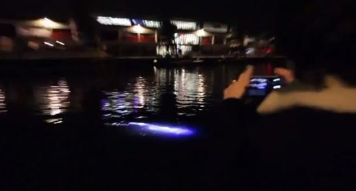 Large 'glowing, pulsating' fish-like creature filmed in Bristol harbour  Glowingweirdcreature