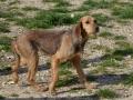 CHANELLE - x griffon 6 ans (5 ans de refuge)  Spa des Cailloux à Dijon (21) Thumbs_Chanelle