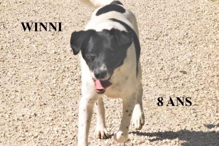 WINNI  - x chasse 8 ans (7 ans de refuge) Spa Ramier à Montauban (82)  16d6d41ac36c2c2421790a6ed85924169