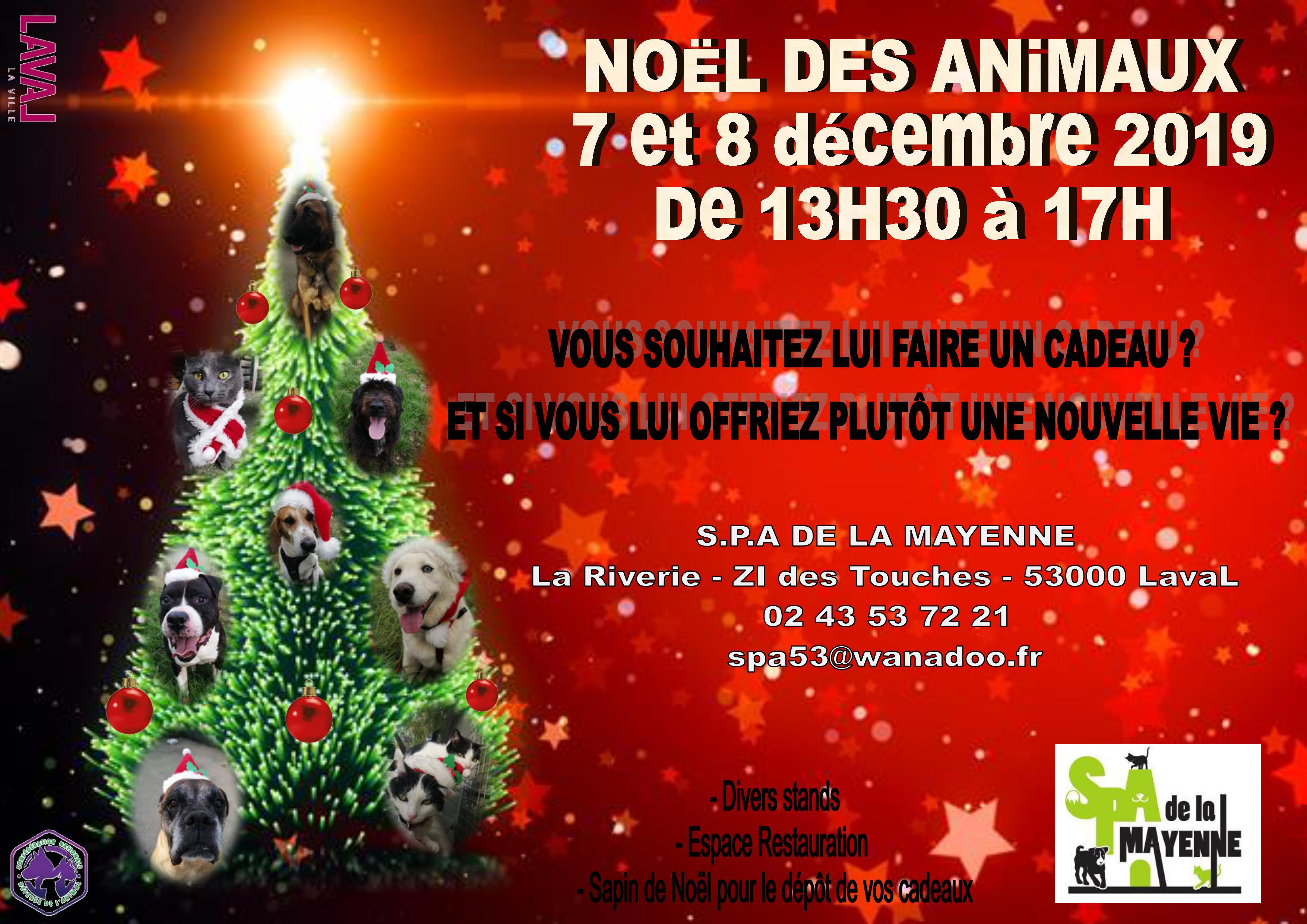 BENCO - griffon 4 ans - Spa de la Mayenne à Laval (53) 0001