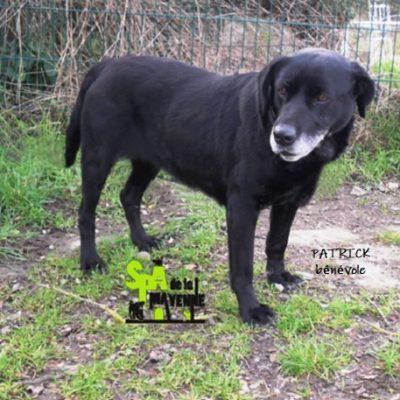 LEYA - labrador 7 ans - Spa de la Mayenne à Laval (53) Lleeyya-400x400