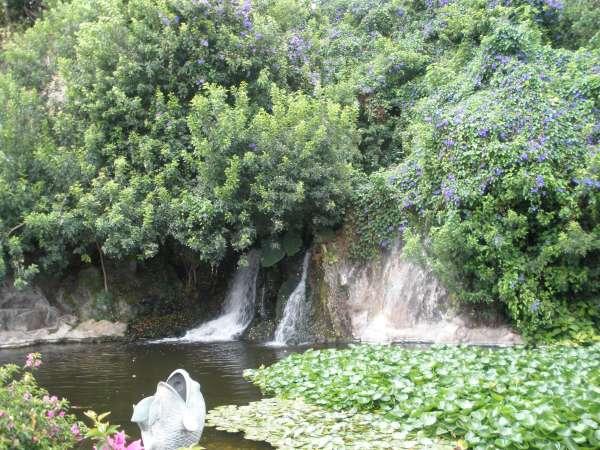 Island Dreams Gruene-oase-loro-parque_2