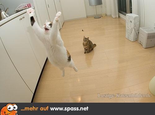 Lidojošie kaķi - Page 2 Lustige-katzenbilder-63d.jpg_w580_h386-500x333