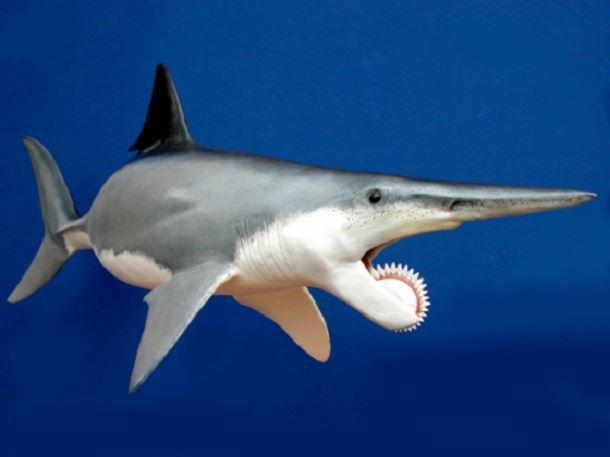20 espèces animales exceptionnelles et terrifiantes qui sont éteintes aujourd'hui. Creatures-effrayantes-%C3%A9teintes-10
