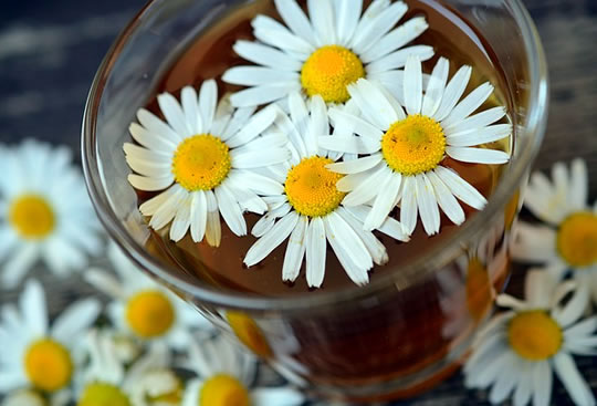 Study: 4 Herbs That Influence Both Mood And Memory Chamomile