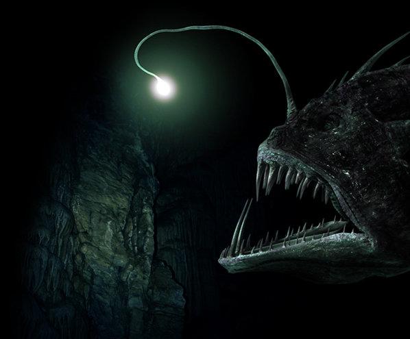 L'Essaim Nocturna Angler-fish