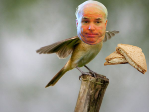 McCain, Ted Kennedy die same date, 9 years apart, from same cancer—Really? McCain-songbird-300x225