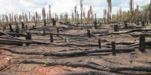 Landscape of a Planetary Information War Deforestation-300x150