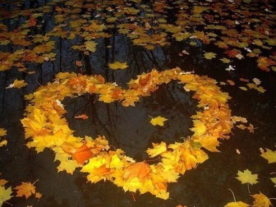 Отцвели цветы, падают листья, птицы молчат, лес пустеет и затихает.ОСЕНЬ. 1925
