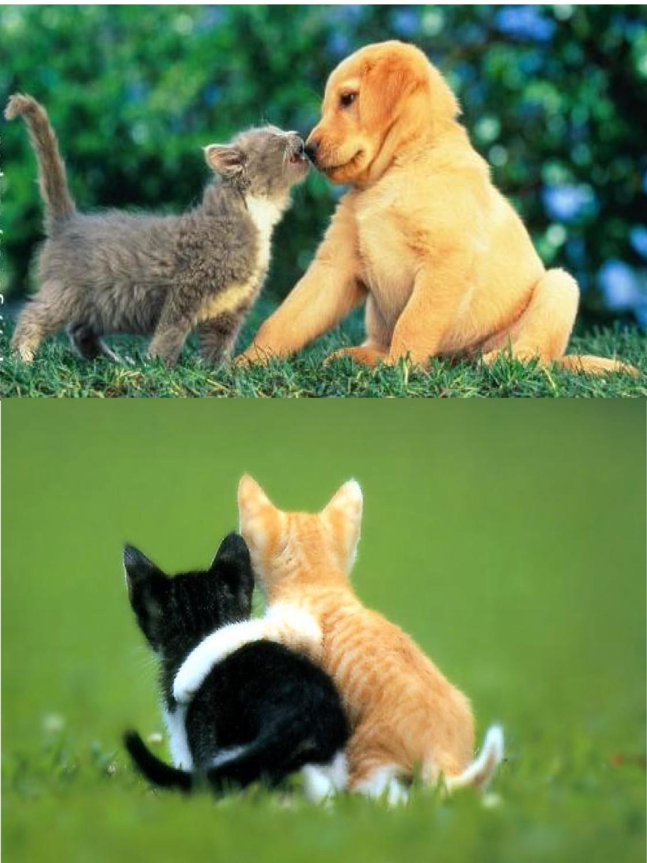 Volim te kao prijatelja, psst slika govori više od hiljadu reči - Page 6 Freundschaft