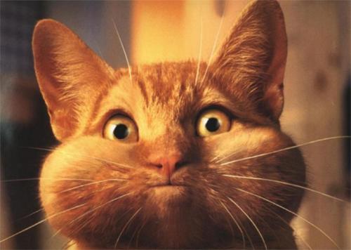 Stop à l'invasion des chats ! 3157_chat_joues