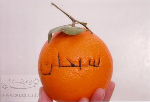 أغرب الصور والعجائب ولله في خلقه شوؤن Orange_thompson_de_Tunisie