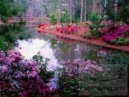 جميع المناظر الطبيعية Bustan