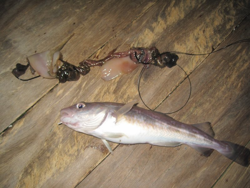 2010 Species hunt submissions. Llandudno-pier_15_01_2010-014