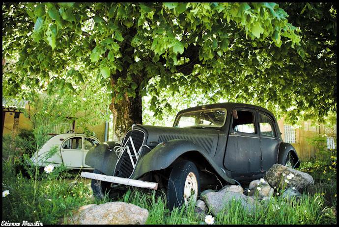 Appel à la nostalgie des épaves automobiles Arbre