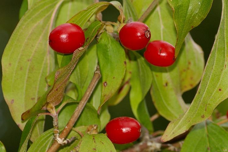 un arbre fruitier - blucat- 2 septembre trouvé par Martine Cornus-mas-2116
