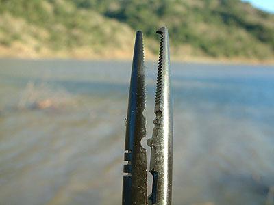 Antes de meter las manos en las fauces de un pez dentado para liberar señuelo...  Picrapalarplr63