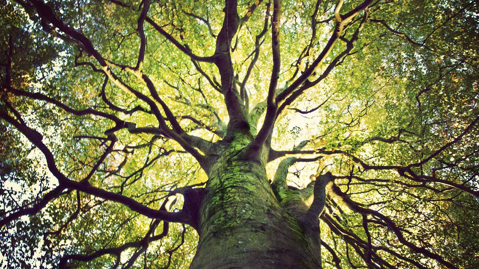 pif paf pouf Tree-promo