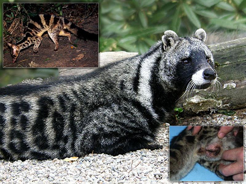 un animal par blucat trouvé par sylvie et  martin - Page 3 01_11170_01_maxi