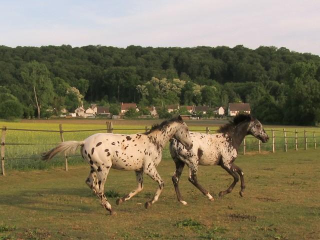 Les vacances chez Talisman Horses Absinth_2011-05_07