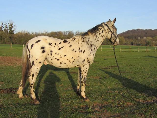 Les vacances chez Talisman Horses - Page 6 Absinth_2012-04_01