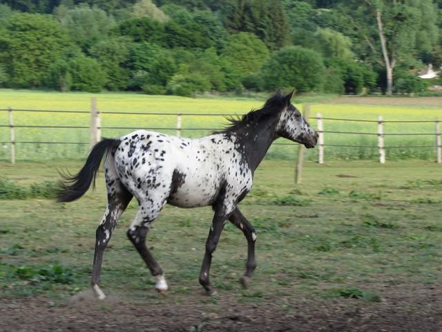 Les vacances chez Talisman Horses Absolut_2011-05_05