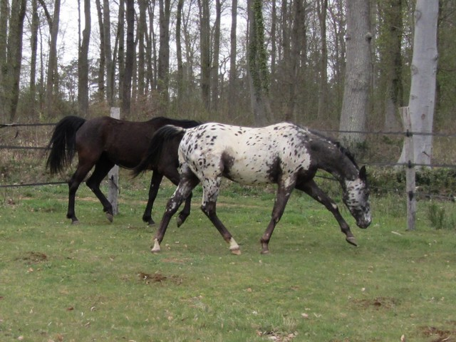 Les vacances chez Talisman Horses - Page 6 Absolut_2012-04_04