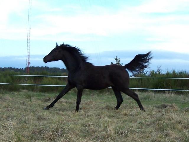Les vacances chez Talisman Horses - Page 5 Arouffka_2011-05_03