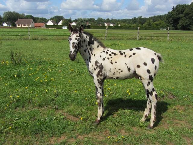 Les vacances chez Talisman Horses - Page 5 Brisk_2011-08_02