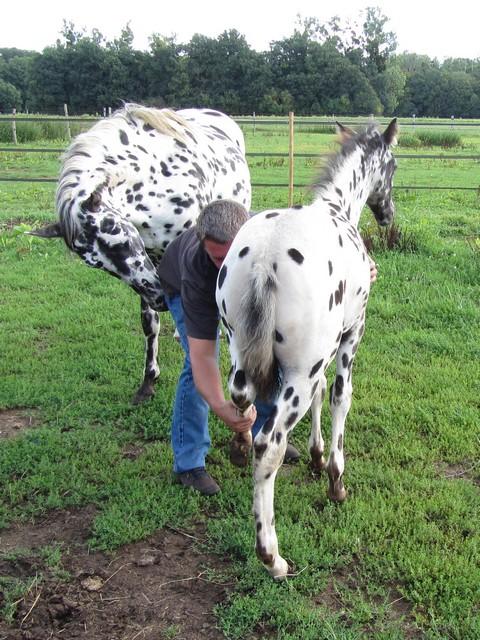 Les vacances chez Talisman Horses - Page 5 Brisk_2011-08_07