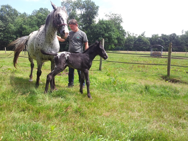 Les vacances chez Talisman Horses - Page 8 Cherokee_2012-07_01