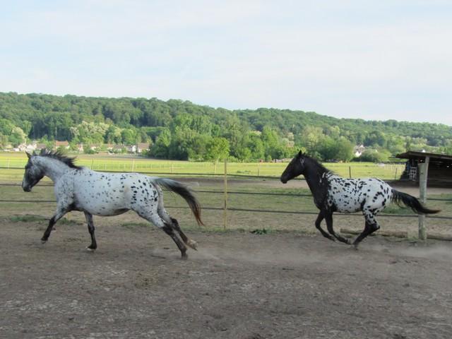 Les vacances chez Talisman Horses Ruby_2011-05_01