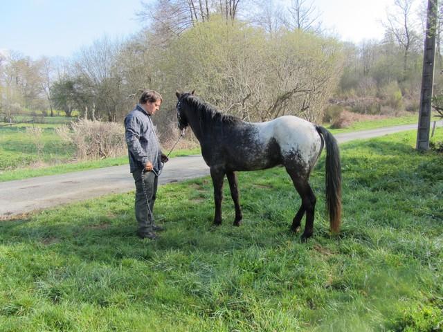 Les vacances chez Talisman Horses - Page 6 Ultimate_2012-04_02