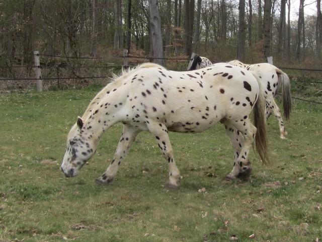 Les vacances chez Talisman Horses - Page 6 Valmy_2012-04_01