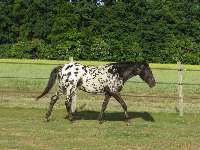 Les vacances chez Talisman Horses Venusian_2011-05_02