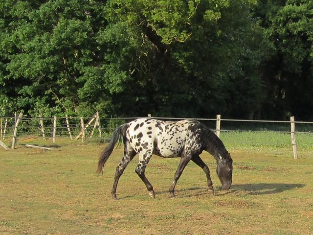 Les vacances chez Talisman Horses Venusian_2011-05_04