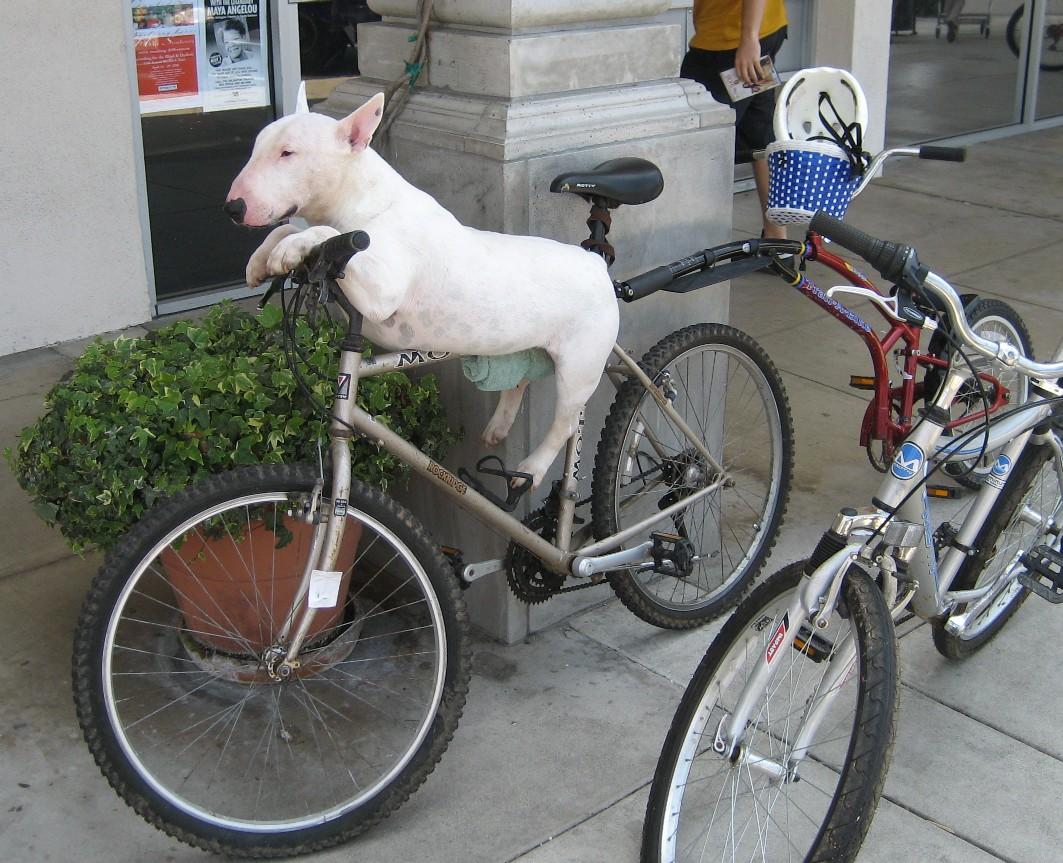 Présentation PierreM Dogbike1big