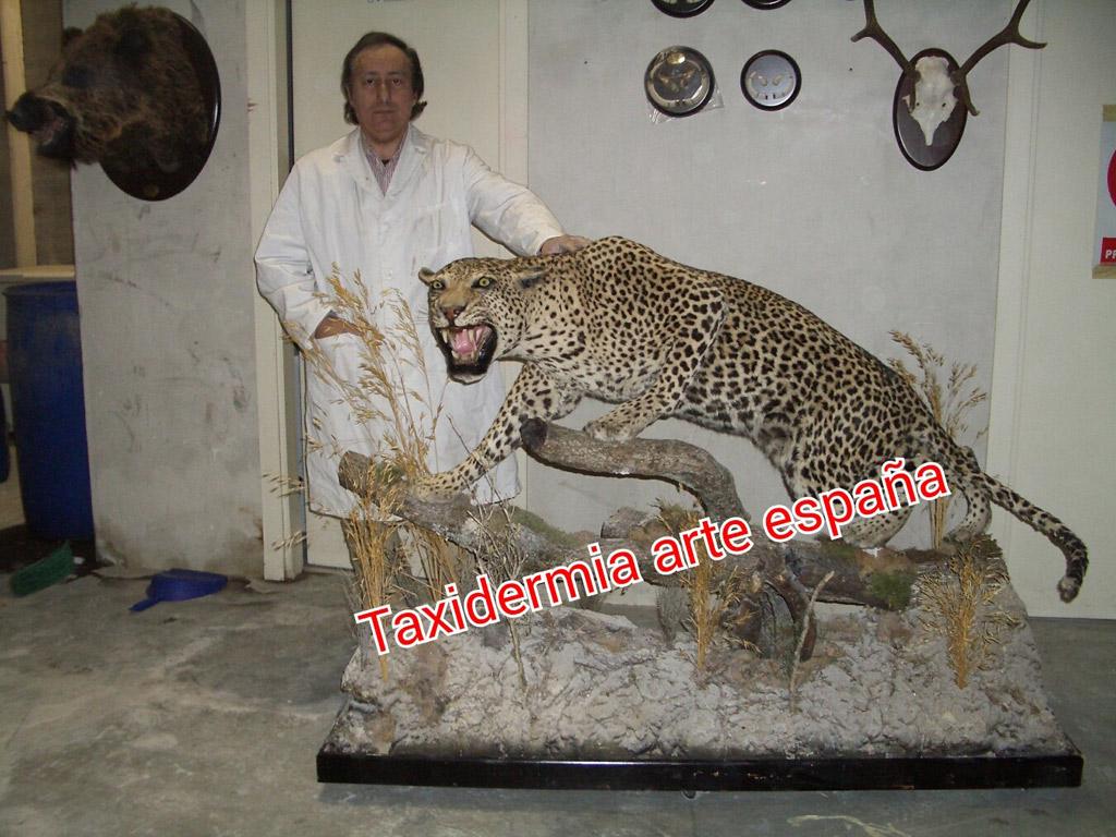Mátame, camión! (El Tópic de la Taxidermia Chunga) - Página 9 Taxidermia_cinegetica_arte_espana_27