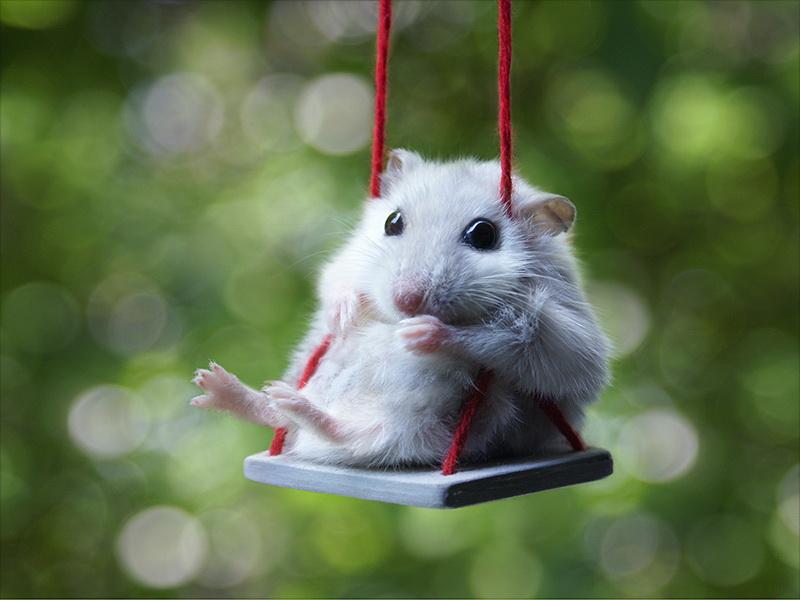 Les communes revisitées ! - Page 2 Hamster-on-a-swing-big