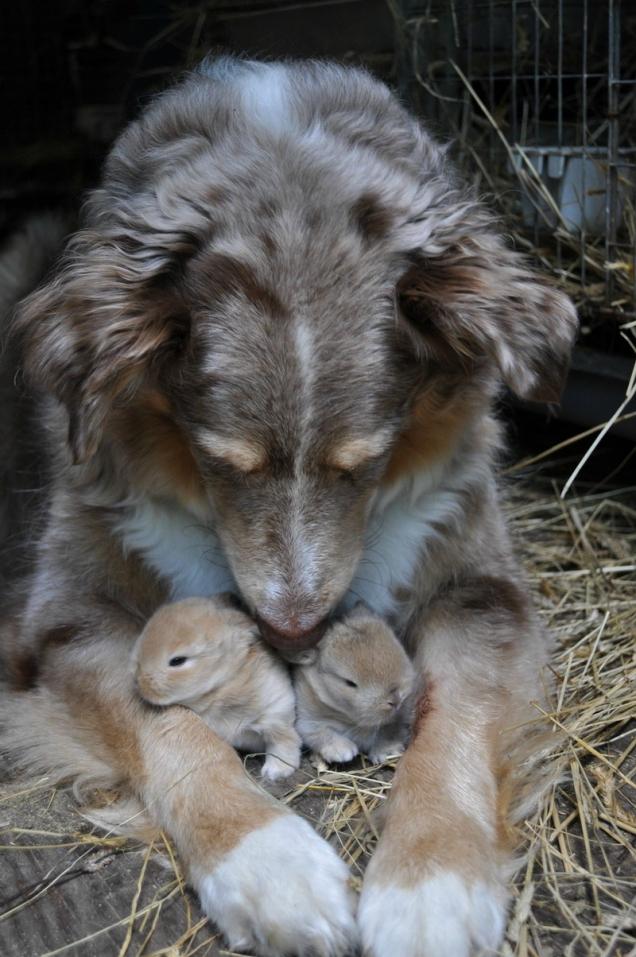 Les macs de la mignonnitude du règne animal Dog-with-bunnies