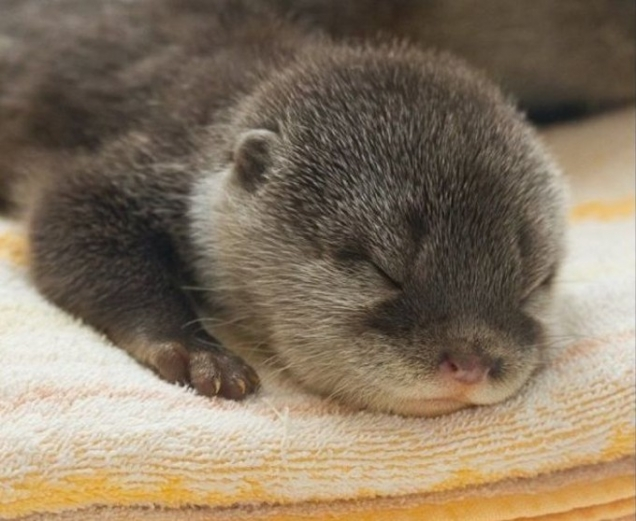 Les macs de la mignonnitude du règne animal Nap-time-