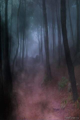 Восточная часть леса. 2069